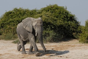 elephant-694469_1920